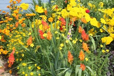 Marguerite N. Decker Landscaping Design and Maintenance